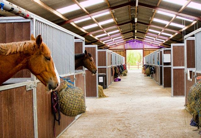 Equestrian Buildings & Arenas